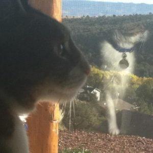 Ed Boks cat