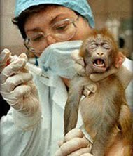 Ed Boks and vivisection