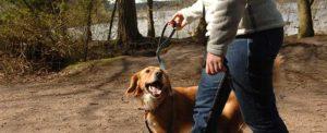 Ed Boks and dog walking