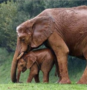 Ed Boks and Elephants